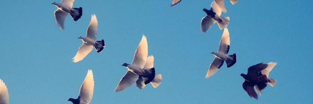 птицы.jpeg